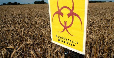 Over 40 Rodent Feeding Studies Show Genetically Modified Food is Disastrous to Health